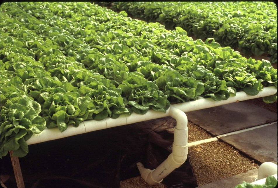 Howard Resh Hydroponic Services