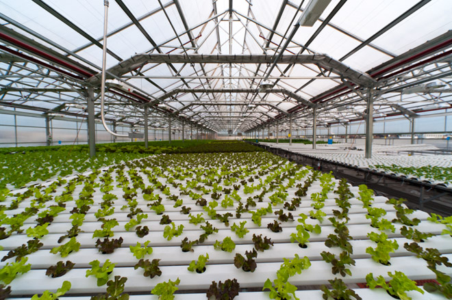 hydroponic farming We offer consultation, construction, & operation of hydroponic, aquaponic, aquaculture, greenhouse & live stock farms we undertake projects with.